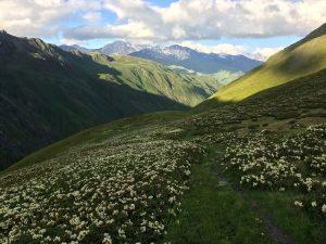 TUSHETI FLOWERS, TREK & DÉCOUVERTE FLORALE 2021